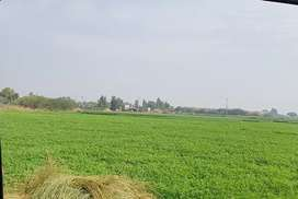 Agricultural land at best location Gujjo half Km from National Highway
