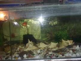 Fish Aquarium 4×2feets