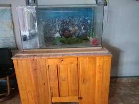 Sachet aqurium ikan