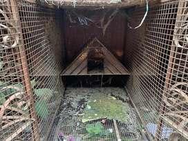 Bird cage good hai