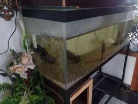 Fish Aquarium 4 feet