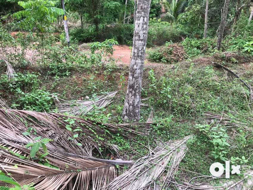 16.5 Cent Land for Sale at Thodannur 0