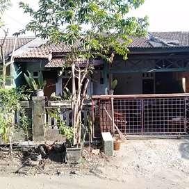 Rumah asri disewa dan dijual