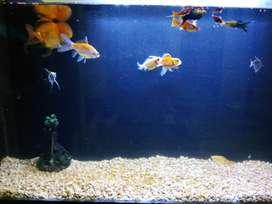 Paket ikan + aquarium