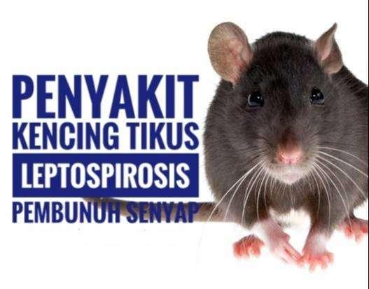 Pengusir Tikus sumber penyakit dan virus menular 0