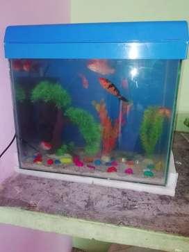 1.6 feet aquarium