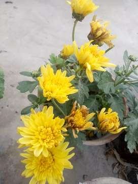 All beautiful plants forsell