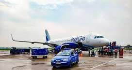 Indigo airlines Urgent hiring for ground staff, and more post  Male an