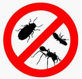 Pest control service of Cockroach, Termites, Ants, Spiders, Lizards.