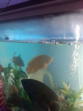 Aquarium with fish