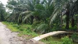 Dijual Tanah Kebun Sawit Seluas 6 Rante / 2400 m2