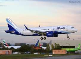 Urgent Hiring for Cabin Crew and Ticketing Executive indigo airlines d