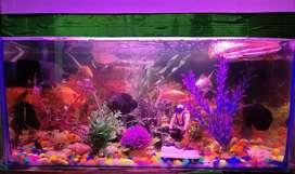 2 feet aquarium
