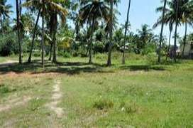 33 Cents Residential land for Sale at Chavakkad, Thrissur.