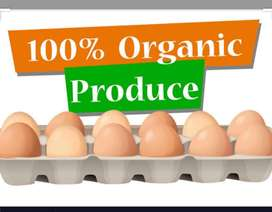 #Organic Eggs(Desi Anday)#natural chicken #meat