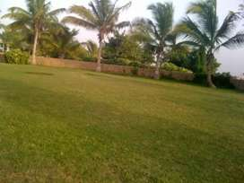 Cattle Farm land available