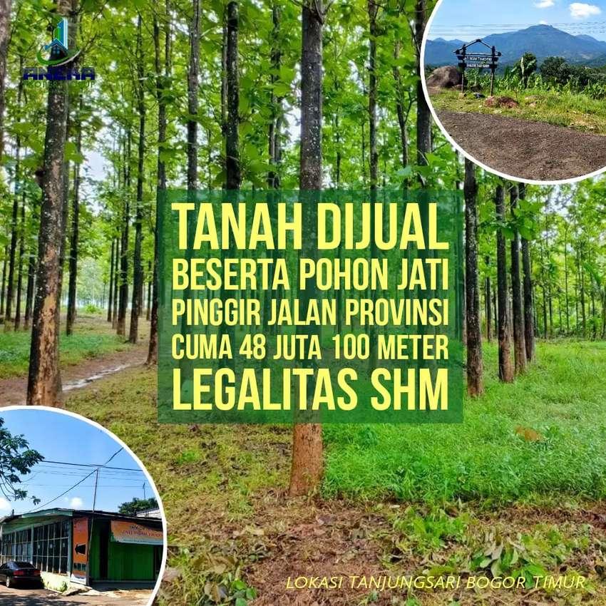 Jual Tanah 480rb per meter bonus pohon Jati besar surat shm