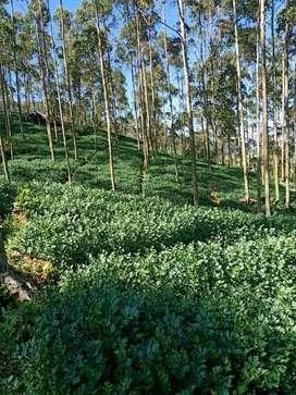 Sewa lahan 1 hektar cocok kebun ternak murah