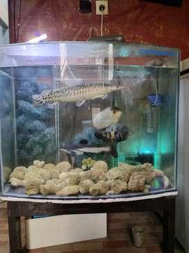 Aquarium Cembung