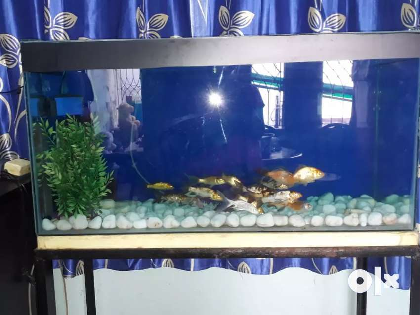 Like new aquriam for sale 1 year old 0