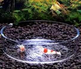 Shrimp fedder try