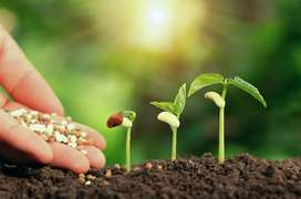 Organic fertilizer management