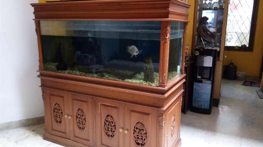 Harga Nego Aquarium Akuarium Kayu 0