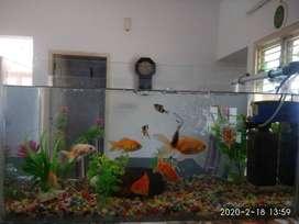Aquarium for sale.. attractive price