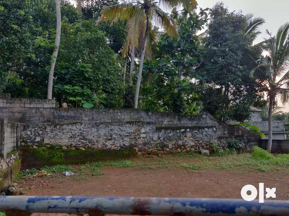 residential plot at pangappara