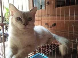 Kucing Lucu warna imut