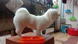 Promo Grooming panggilan anjing kucing