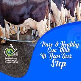 Pure Cow Milk & Desi Ghee at your Doorstep