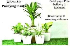 Set of 5 Air purifier Plants