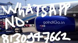 Jobs available in airport jobs IndiGo