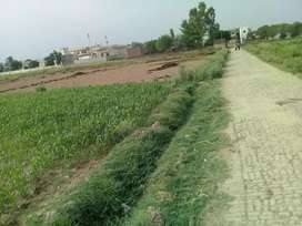 Agriculture Land For Sale On 11Feet Road  Near Village Gunna Sialkot