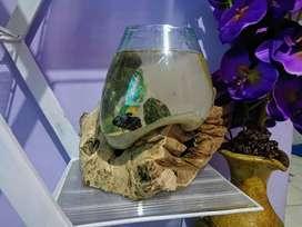 Wooden Aquarium Murah bernilai seni tinggi