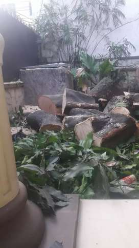 Jasa tebang pohon .pangkas pohon.cabut akar surabaya sekitarnya