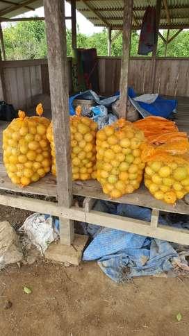 Lemon Lokal Organic