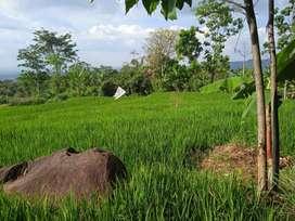 Tanah Sawah Dan Darat Dijual Murah di Bojong Purwakarta