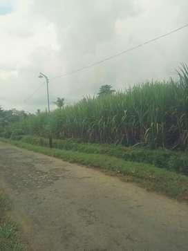 Tanah murah dan subur Wajak Malang