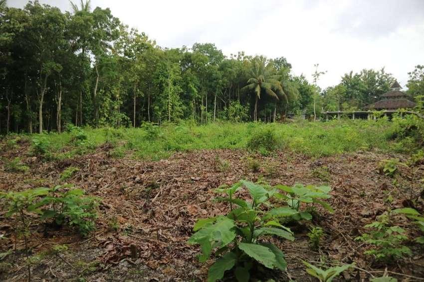 Untung Beli Kapling Tanah Dekat Jalan Raya Parung Sedang Diskon 25%