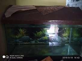 Fish tank no water linage