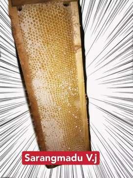 Sarang madu murni asli