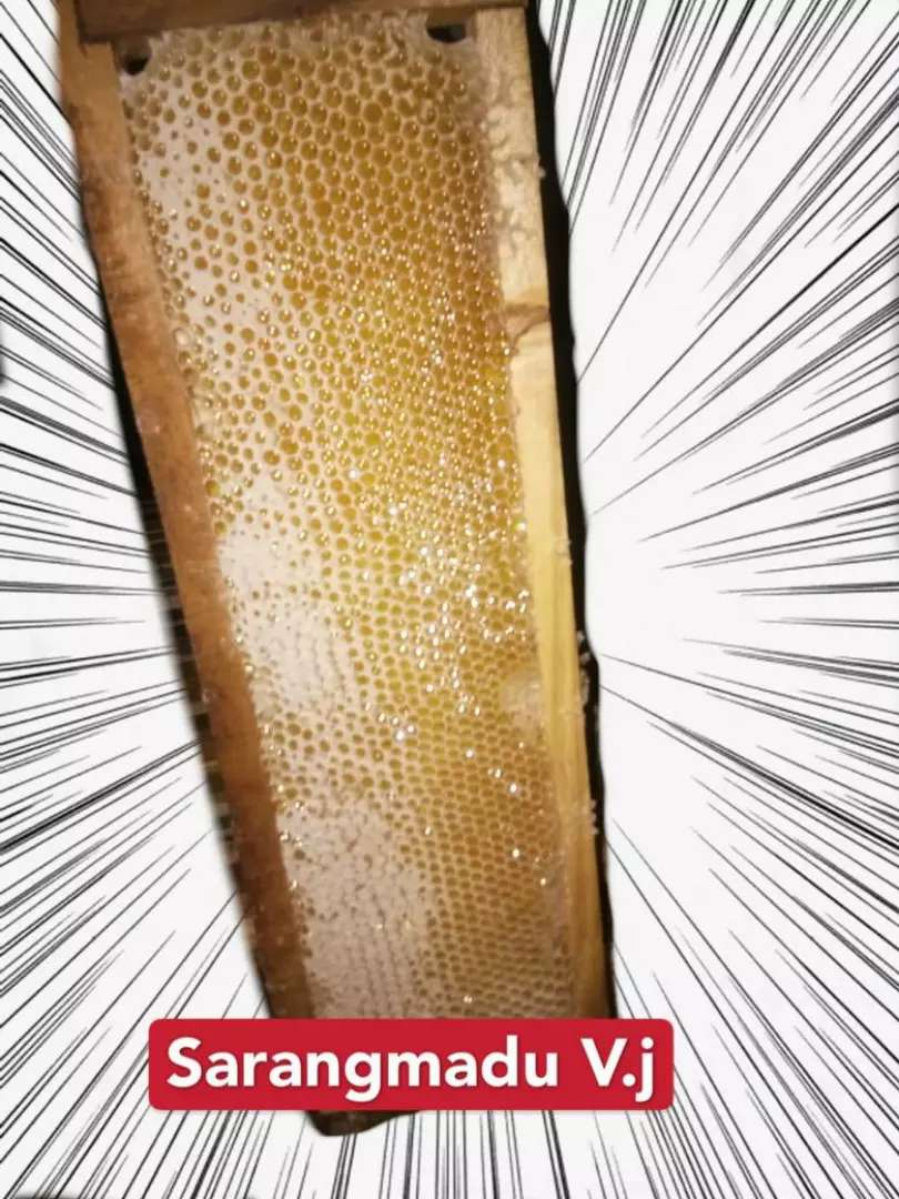 Sarang madu murni asli 0