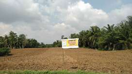 Tanah 24.5 rante (9500 m²)