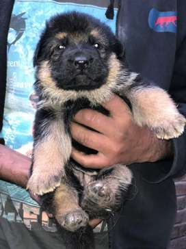 Double coated GSD