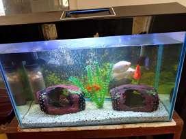 Aquarium urgent sell . price 4000