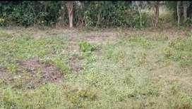 1bigha land at Kuruwabahi, Samaguri