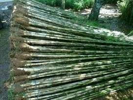 Suplier Dan pengadaan bambu Jepang