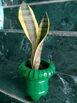 All types of plant's Available each plant 200 Rs